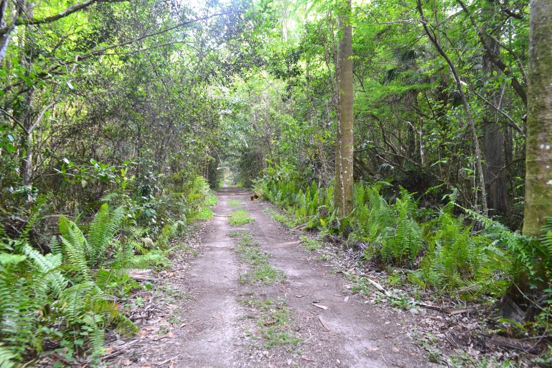 Trails-Florida-Everglades.JPG